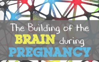 The building of the brain during pregnancy