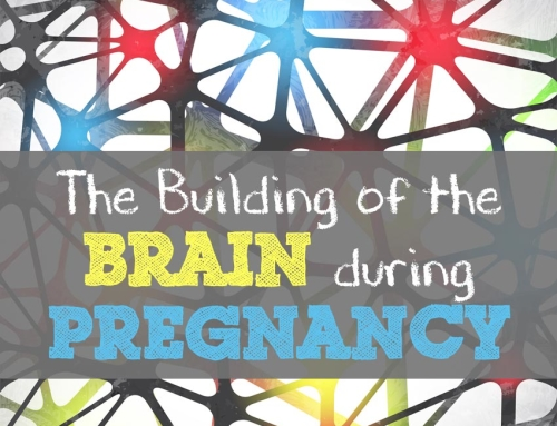 Neurogenesis – The building of the Brain