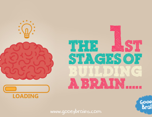 The first stages of building a brain